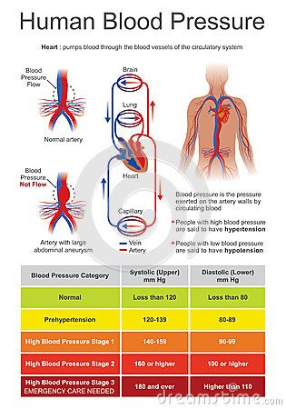 Blood pressure BP is the pressure of circulating blood on the walls ...