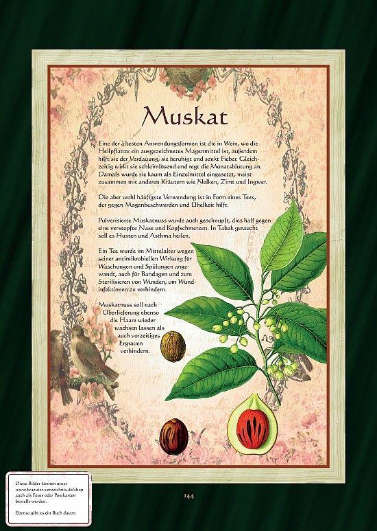 Muskatnuss Pflanzen Heilpflanzen Krauter Pflanzen