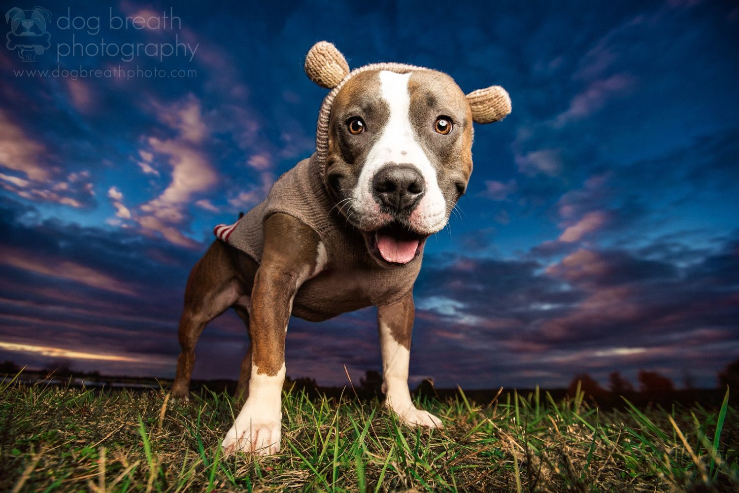 Meet One Of The Best Dog Photographers On 500px And In The World I Love Dogs Dog Breath Dog Photograph