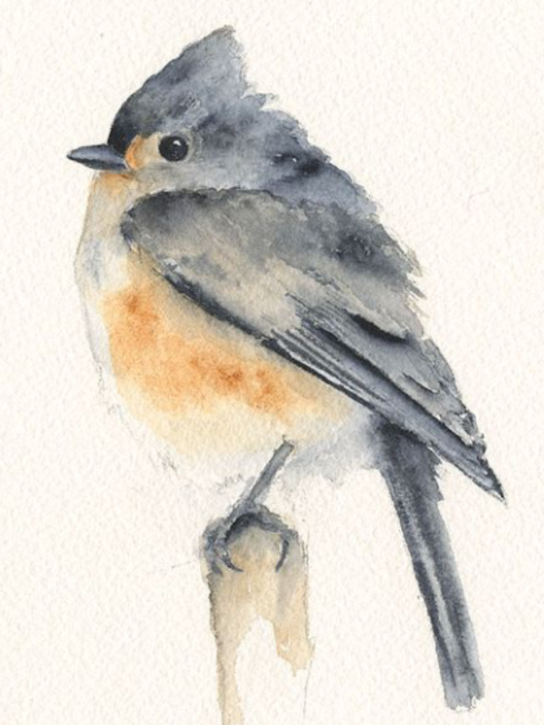 Tufted Tit Mouse Print for Framing | eyes | Pinterest | Aquarell ...