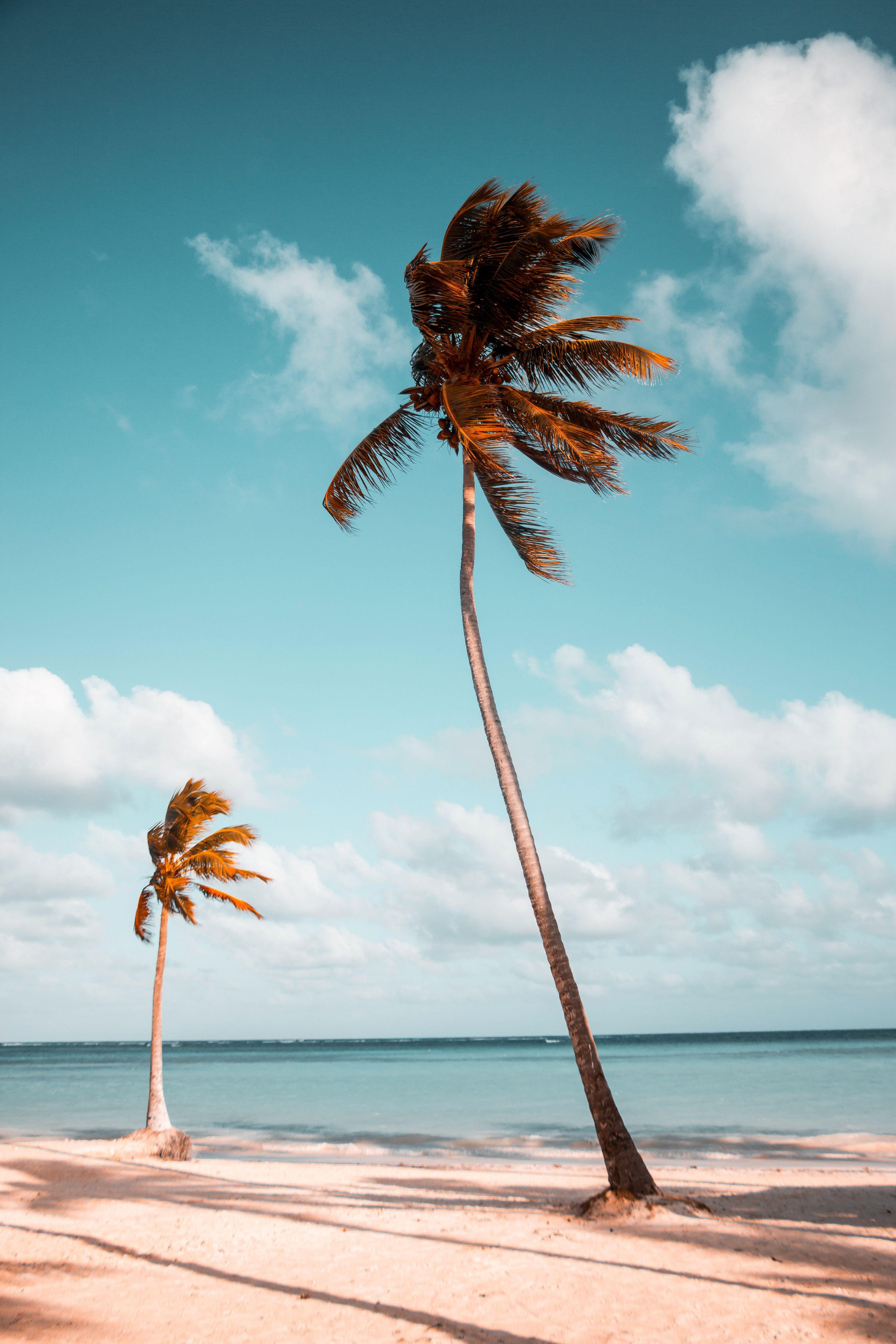 Urlaub Die 10 Nachhaltigsten Reiseziele Der Welt Wienerin Palmen Bilder Strand Foto Ideen Strand Bild Ideen