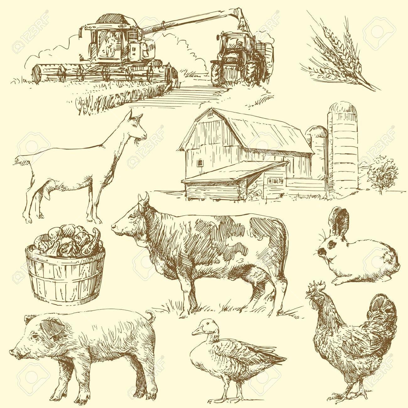 Resultado De Imagen Para Farm Vintage Vector IllustrationsFarm PartyAnimal