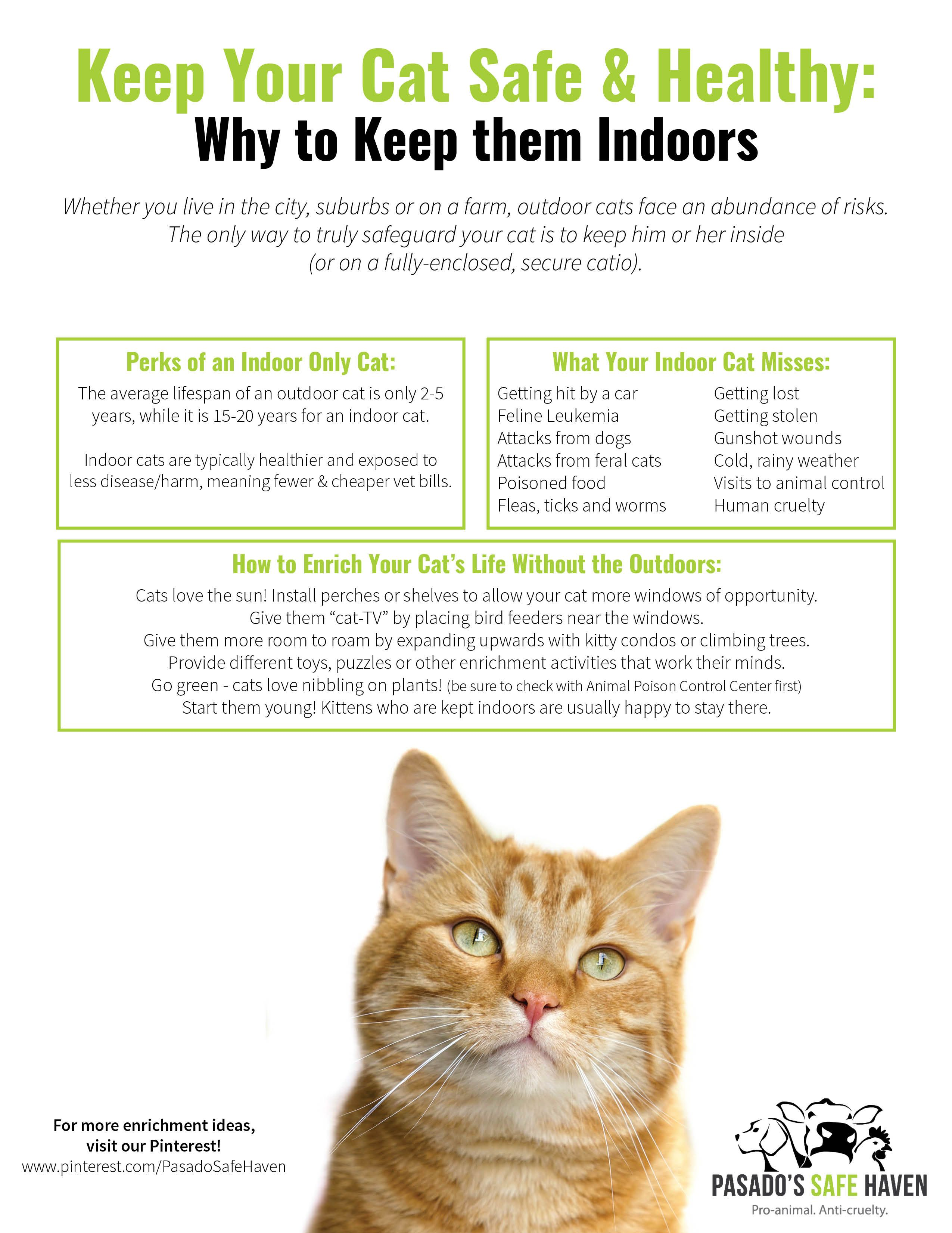 Cats Indoors Versus Outdoors Kitten Adoption Cat Safe Cats And Kittens