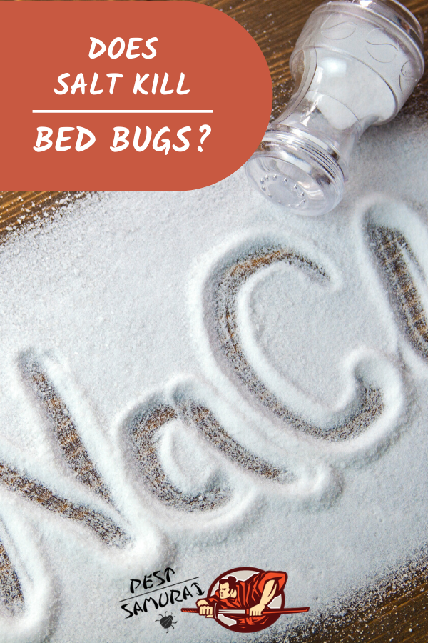 Does Salt Kill Bed Bugs Kill bed bugs, Bed bugs, Bed bug