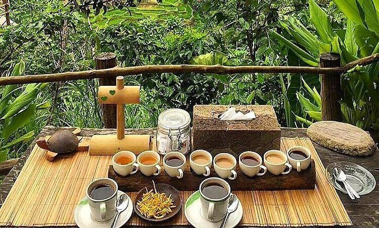 Civet and Luwak Coffee Revealed At Bali Pulina