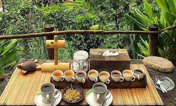 Civet and Luwak Coffee Revealed At Bali Pulina