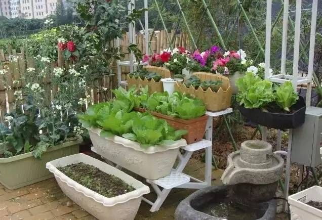 家庭菜園款式參考130例 With Images Container Gardening