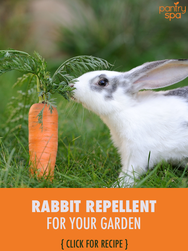 Keep Bugs Bunny And Bambi Out Of Your Garden. We Have Three Recipes For A