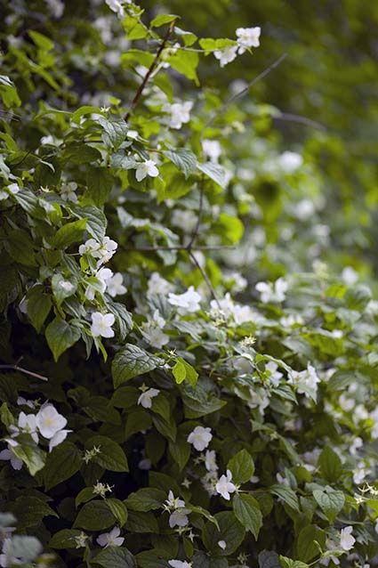 Schnell wachsende Pflanzen als Sichtschutz