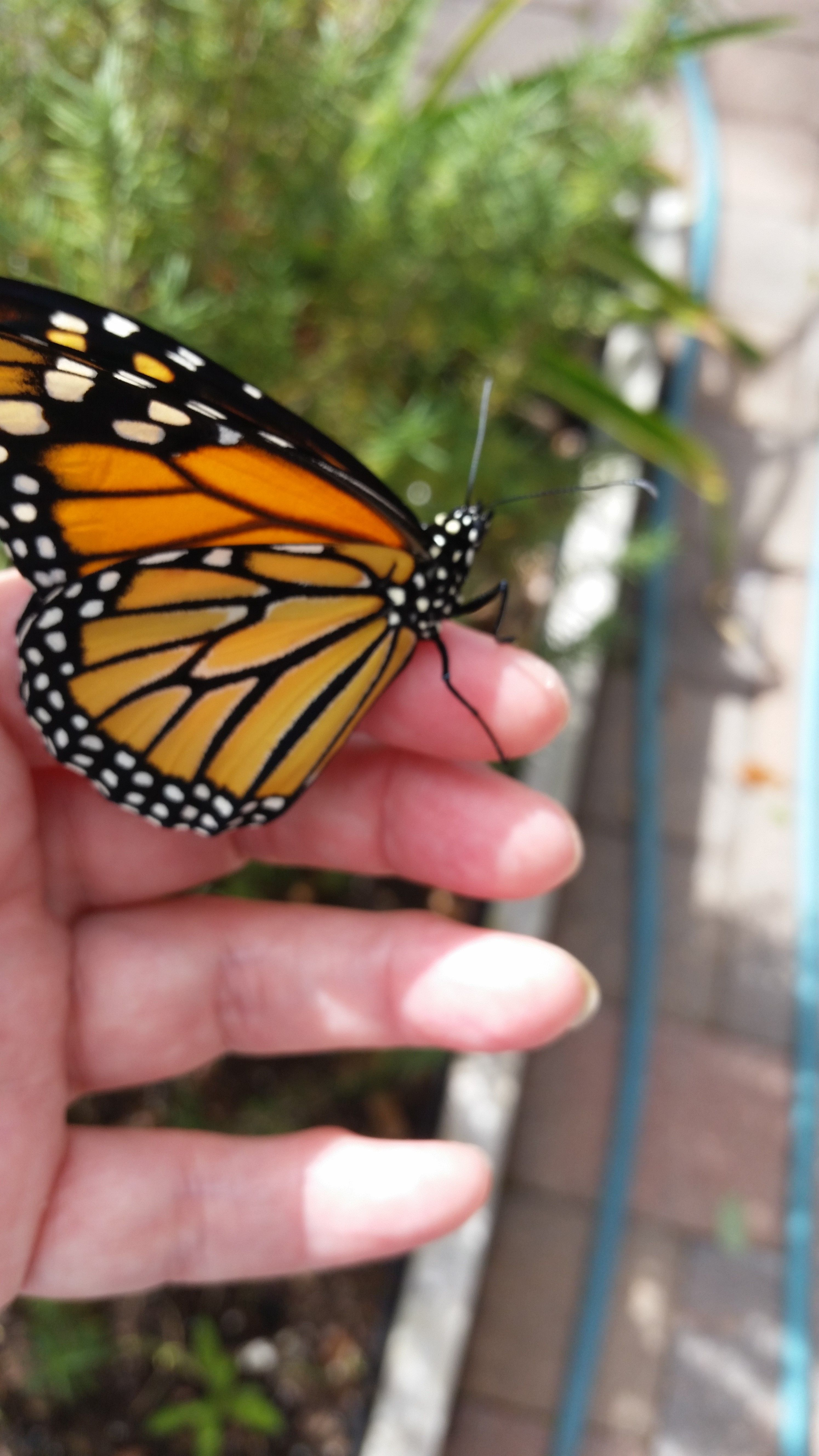 18++ Monarch butterfly animal crossing images