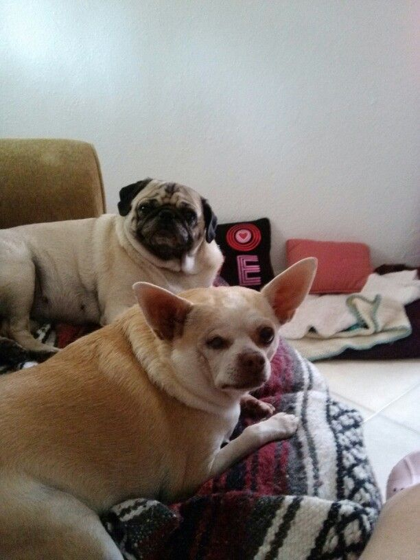This Is Harly N Daisy French Bulldog Bulldog Animals