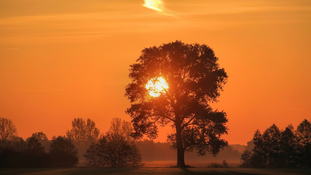 Gambar Pemandangan Pohon Alam Horison Awan Matahari Terbit Matahari Terbenam Kabut Bidang Sinar Matahari Fajar Suasana Senja Land Scape Natureza