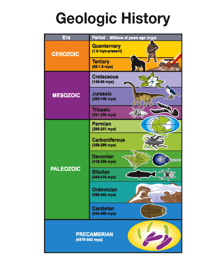 Image result for human geologic time scale