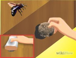 Get Rid of Carpenter Bees   Carpenter bee, Carpenter bee ...