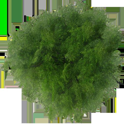 blog-images-detourees-4-vegetation-arbre-dessus-1.png (500 ...