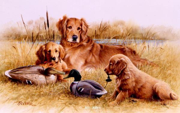 Retrievers Painted By Jim Killen 39 Dog Allergies Dog Paintings
