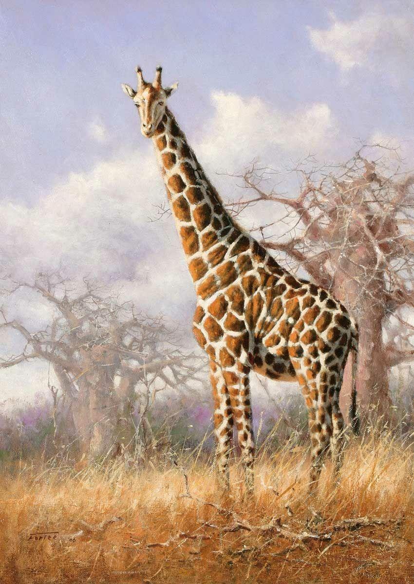 Жираф на природе картинки для детей