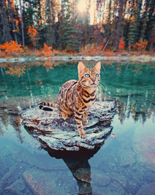 Reddit The Front Page Of The Internet Pretty Cats Beautiful