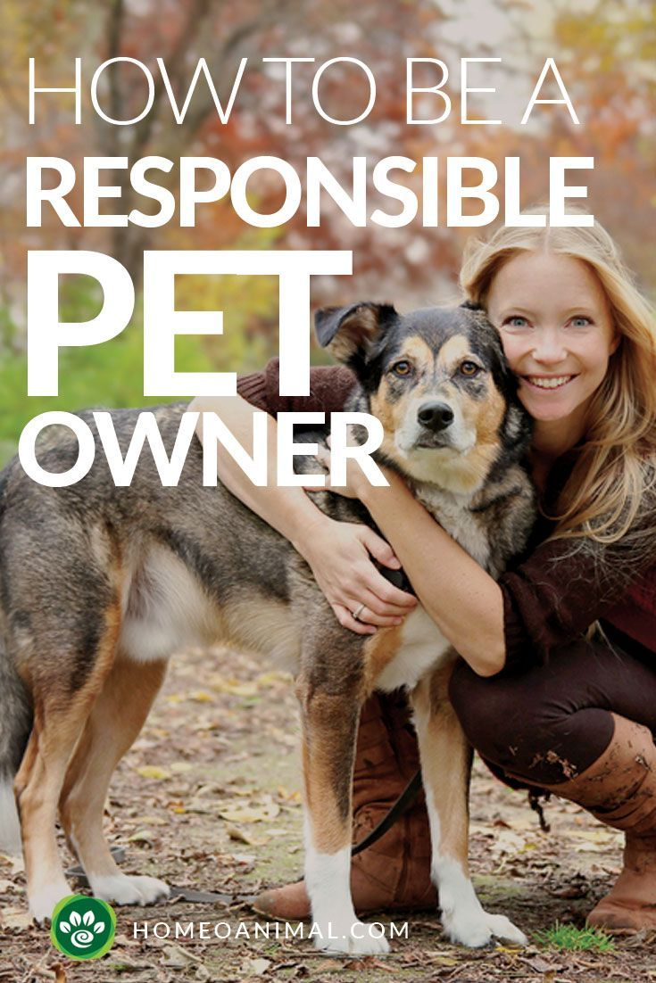 How To Be A Responsible Pet Owner The Ultimate Guide To Pet Adoption