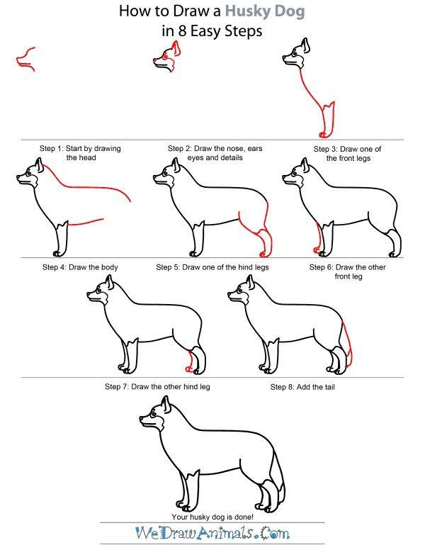 How To Draw A Husky Drawings Dog Steps Husky