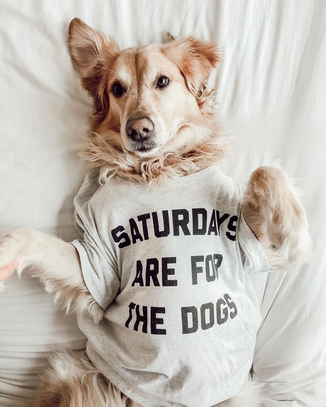 Saturdays Are For The Dogs Dogs Smiling Dogs Dog Lovers