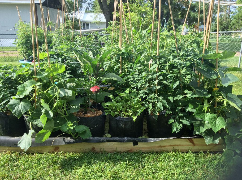 Complete Grow Bag Garden Systems Adjustable Kerick Float Assembly Wor Aquaponics Diy Plants Aquaponics Plants