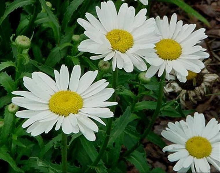 Sommerblumen Die Schonsten Und Farbenprachtigsten Arten Garten