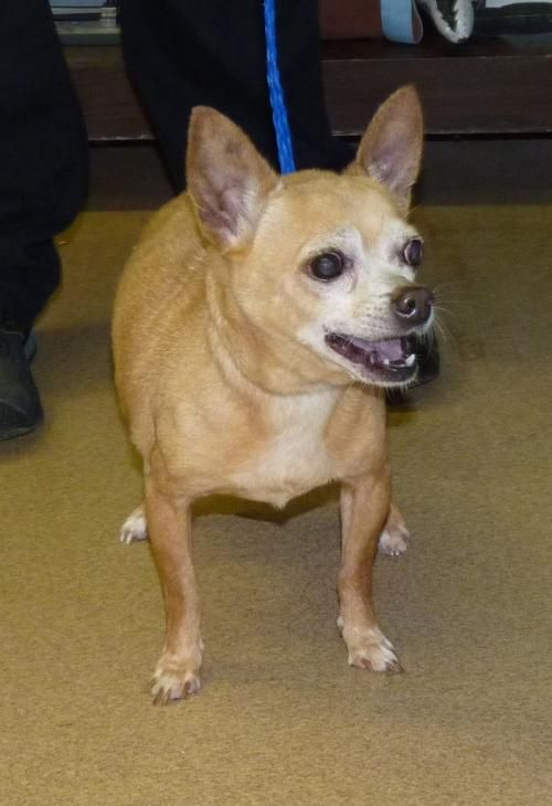 Charlie 44245 Rescue Only Urgent The Animal Shelter