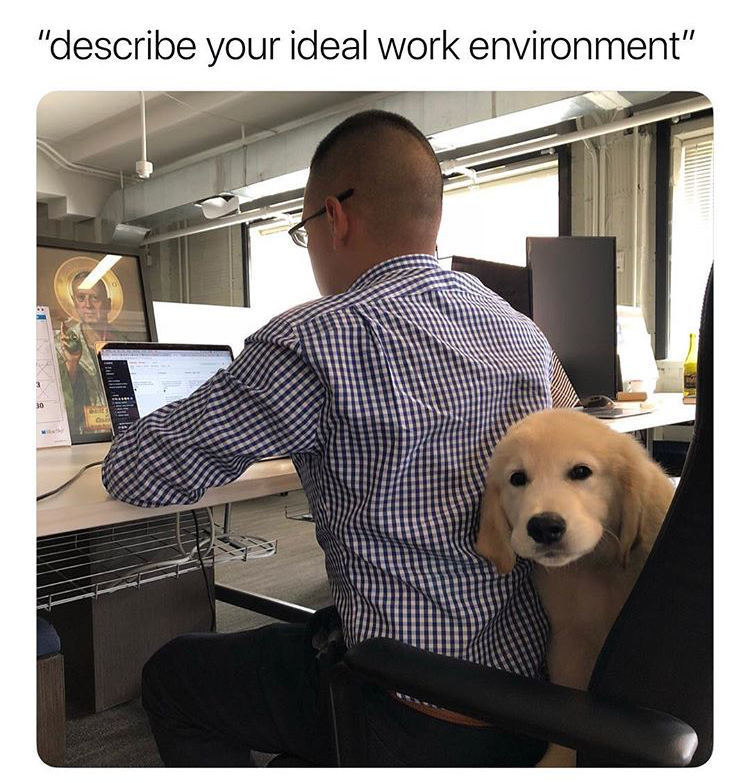25 Workplace Memes For Anyone Who S Ever Hated Their Job Dog Memes Funny Animal Memes Dog Jokes