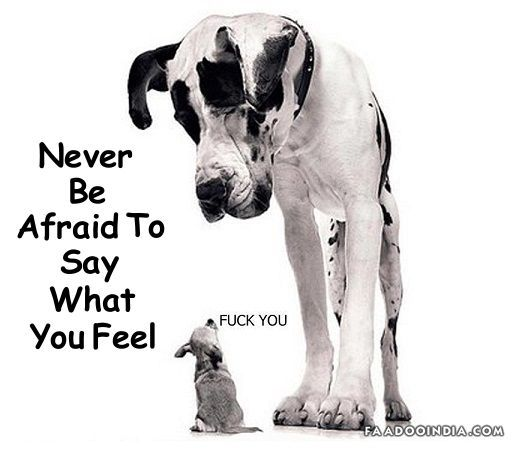 Say How You Feel Quotes Little Dog Tells A Big Dog How He Feels