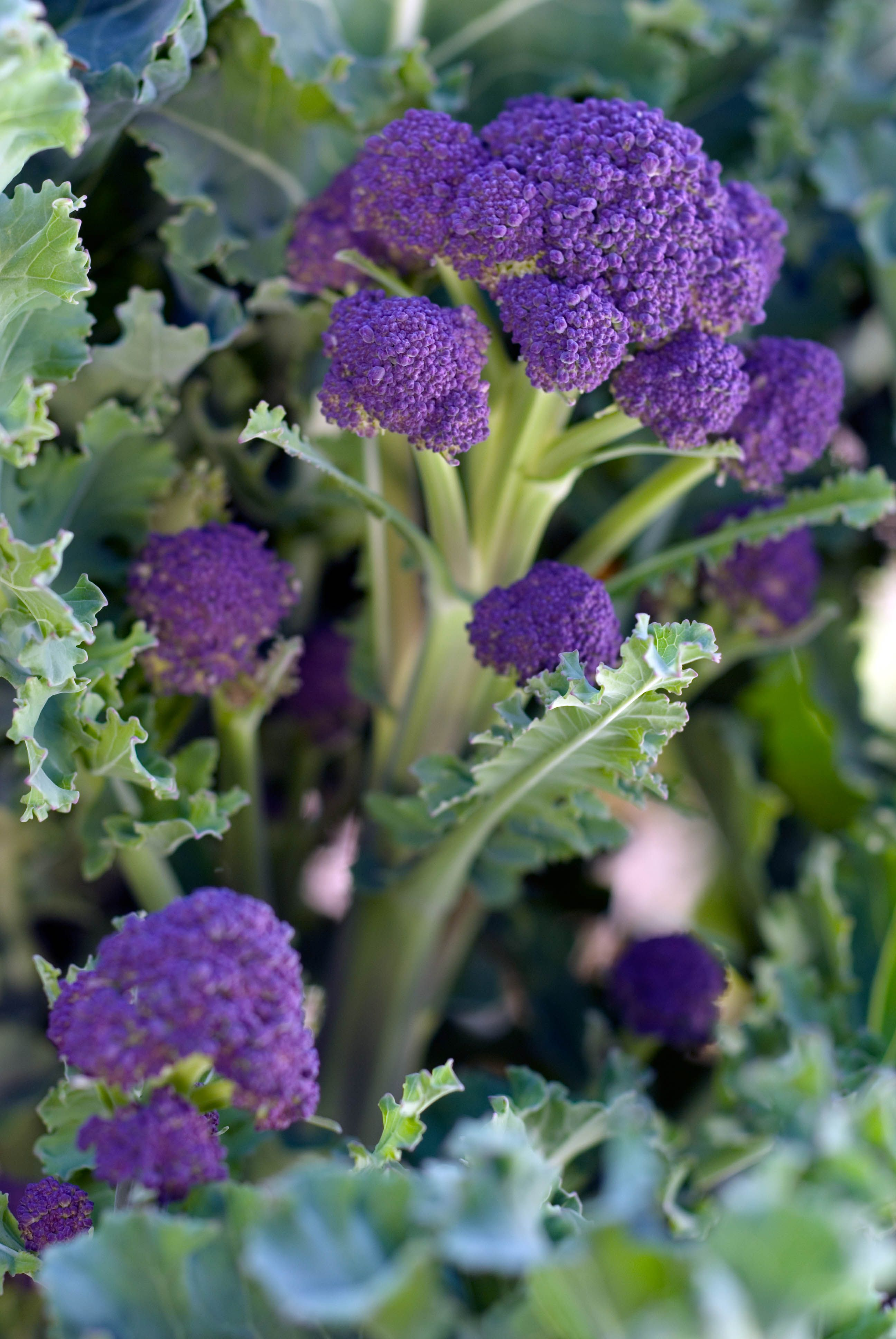 Get Ready To Plant Winter Vegetables Growing Winter 400 x 300