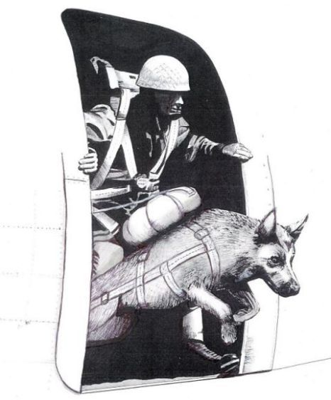 Bing, the parachuting World War II dog who leapt from a plane on D-Day and led troops to victory