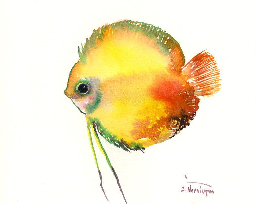 Yellow Discus Fish Original Watercolor Painting 8 X 10 In Red