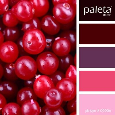 Color Palette 4 Cranberry And Navy With Yellow White Light Blue