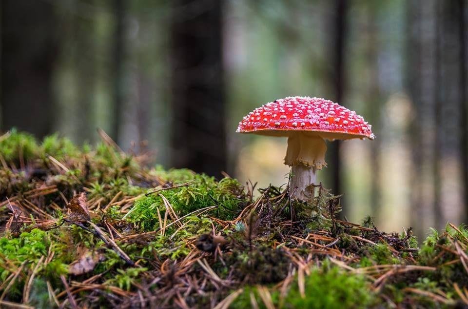 Os Cogumelos Pertencem Ao Reino Dos Fungos Fungi E Um Grupo De