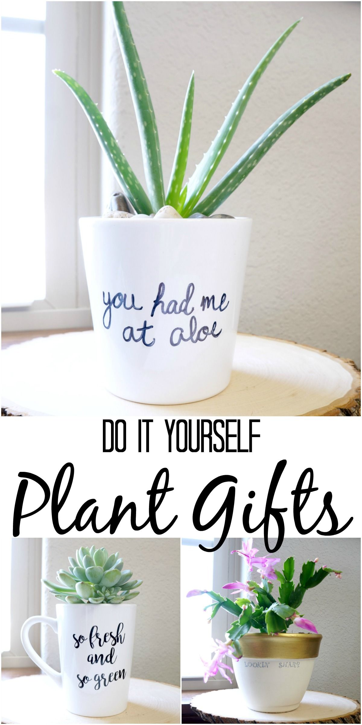 Simple Diy Plant Gifts Mit Bildern