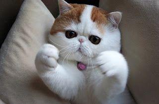 Tips Memberikan Nama Kucing Yang Lucu Dan Bagus Untuk Semua Kucing Foto Kucing Lucu Gambar Kucing Lucu Binatang