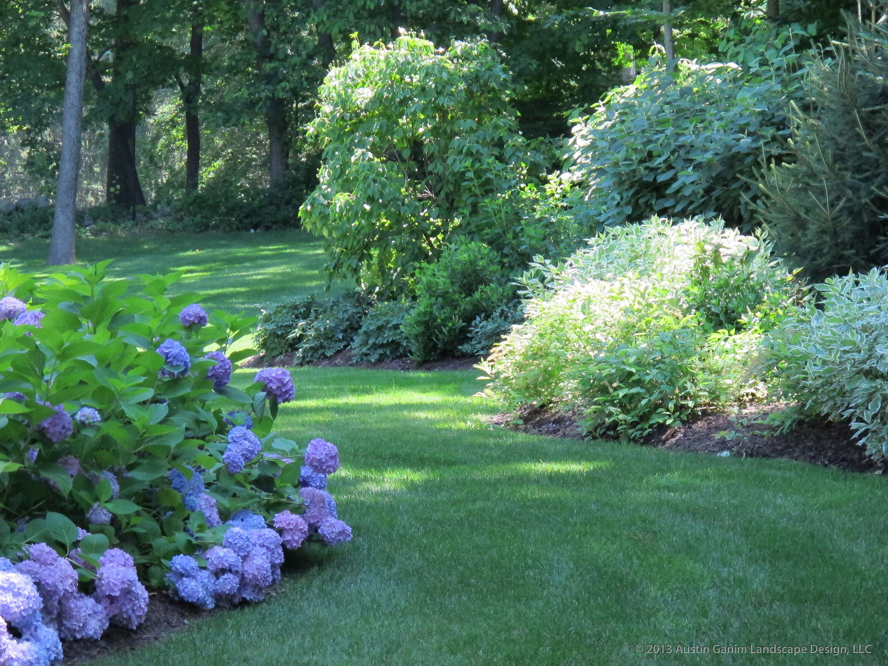 a path between plantings beds in this shady yard, drifts of blue