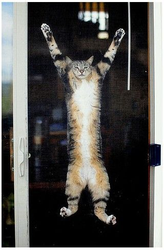 This is something my cat Captain Rowdy socks Goldmintz would do.