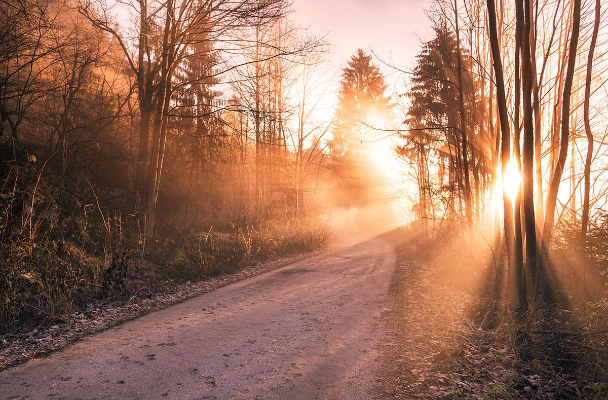 Autumn sunrise in the forest   Landscape photography ...