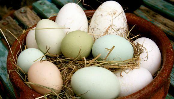 Egg Nutrition #eggnutritionfacts