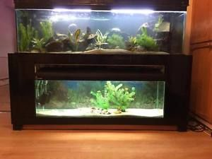 Double Aquarium Fish Tank 5ft 4ft Aquariums
