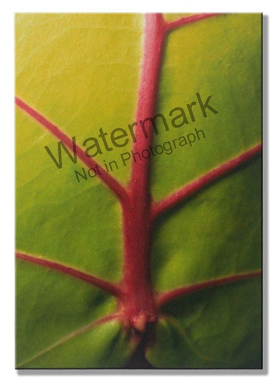 "This is a 20"" x 30"" photograph mounted on 1/2"" Gatorboard  The Leaf by HadItMade on Etsy"