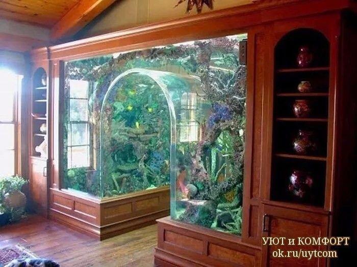 Home Aquarium Ideas The Aquarium Buyers Guide 52 Odnoklassniki