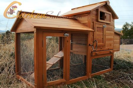Can I Keep Chickens in My Backyard?   Backyard poultry ...