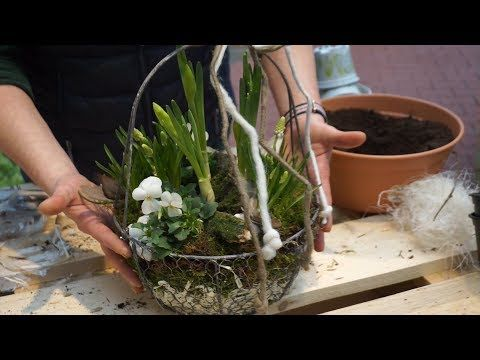 DIY Der Frühling im Körbchen Gartencenter Mencke