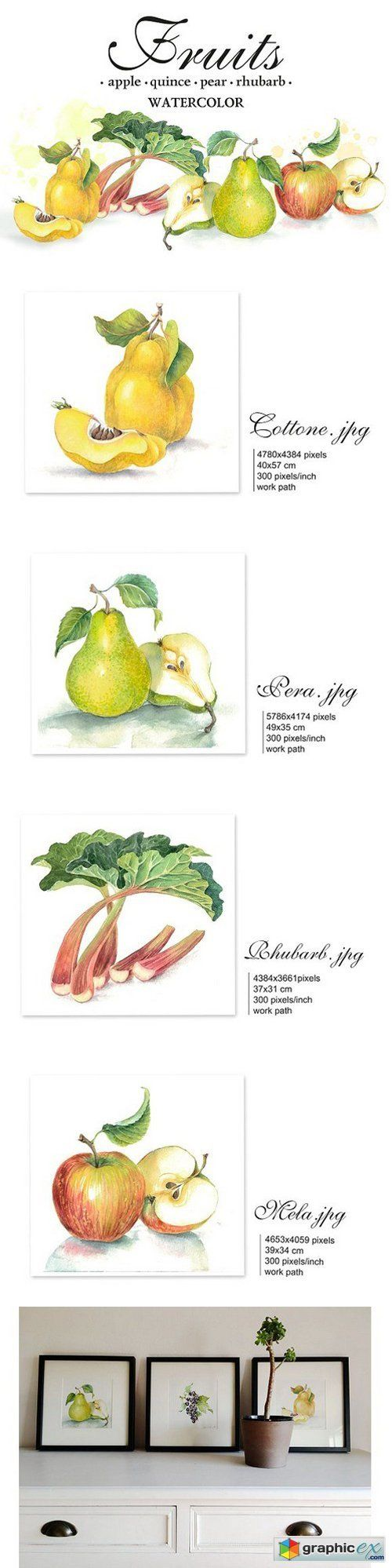 "Set of 4 watercolor ""Fruits""  stock images"