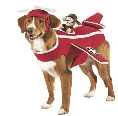 airplane dog costume - Google Search | Maverick\'s Board ...