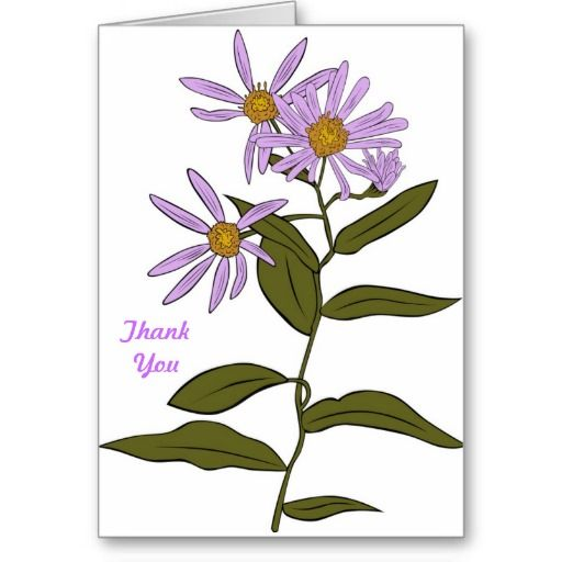 Pretty Garden Daisy Aster Flower Blooms Thank You Zazzle Com In 2020 Flower Drawing Aster Flower Flower Clipart