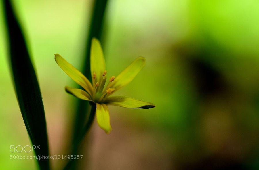 Wild flower by hidekiokoty0530 #nature